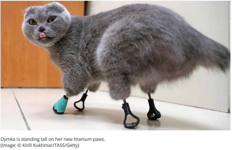 3D printing cat feet