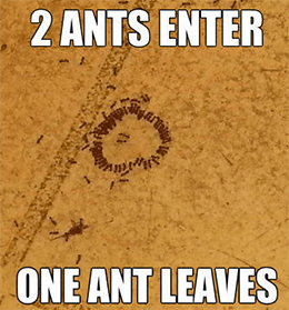 The Shanghai Stock Exchange suspended Ant's IPO.