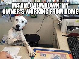 Zoom virtual dog receptionist meme
