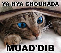 Ya Hya Chouhada Muad'dib sand investing meme