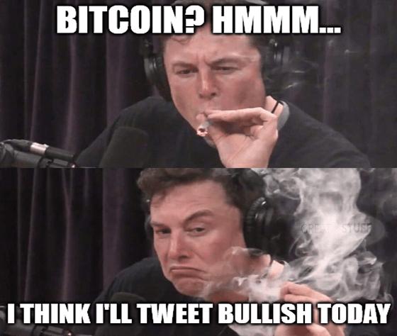 Musk bitcoin tweet bullish indecisive meme big