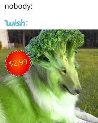 Wish be like broccoli dog meme