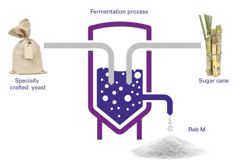 fermentation process stevia sugar